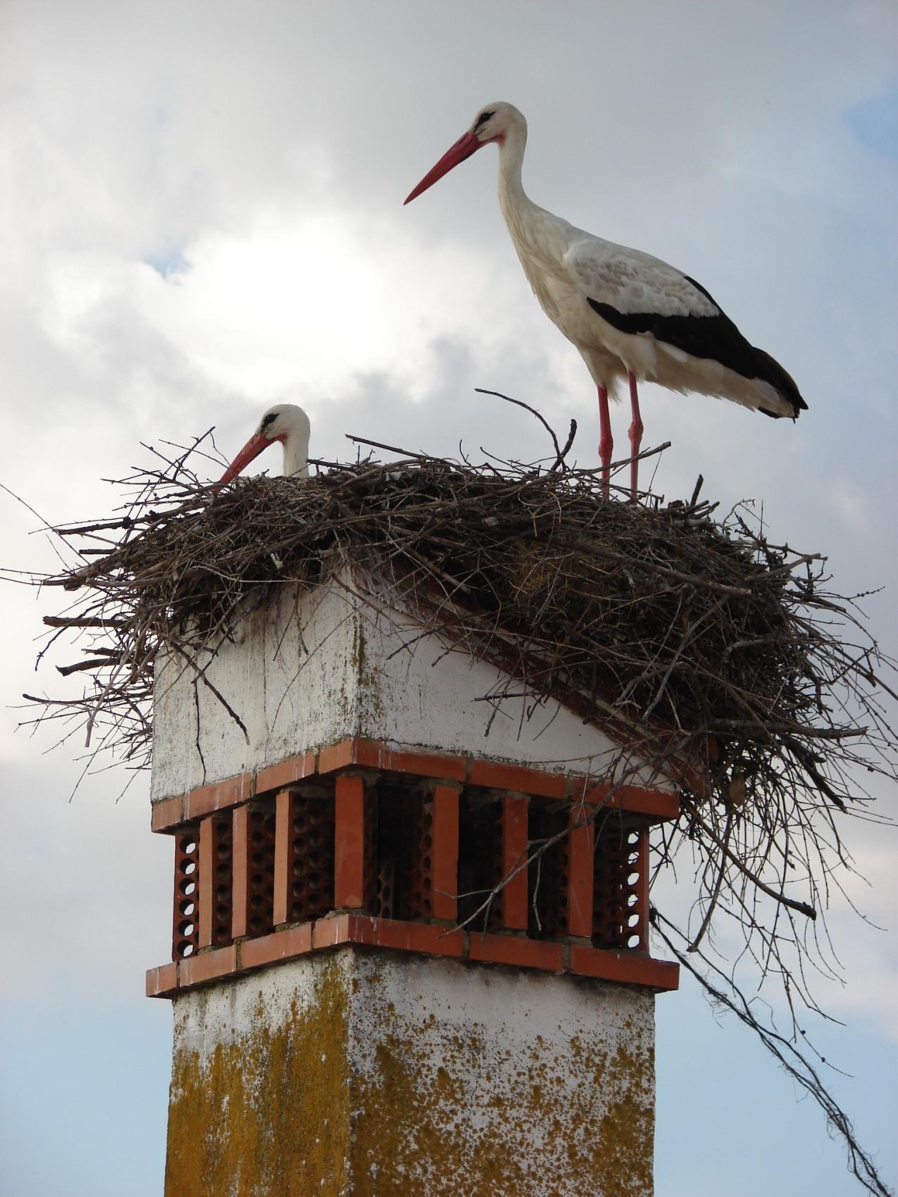Baja el censo de nidos en el periodo 2009-2010
